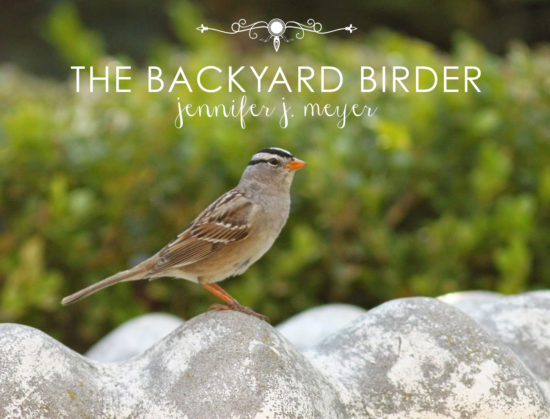 J.J. Meyer The Backyard Birder